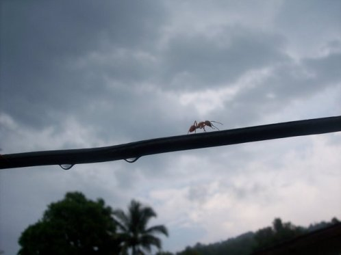 ant on the line